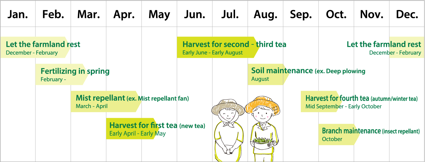 Annual schedule of a tea farmer